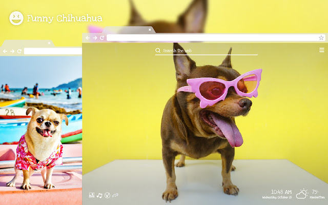 Funny Chihuahua - Hilarious Pet HD Wallpapers