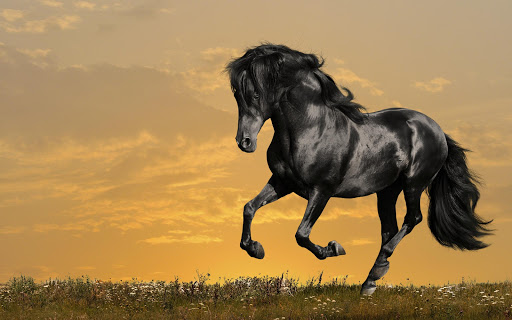 Horses Pack 2 Live Wallpaper