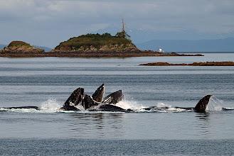 Photo: Humpback Whales - Taken 6/19/10