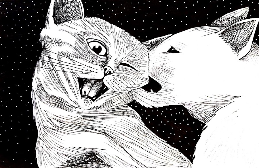 Wild Side by Melissa Toothman - Drawing All Drawing ( play, cats, meow, feline, rough, wild side, romp, romping, felines, wild )