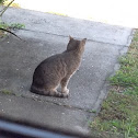 Cat ( One Outdoor Cat )