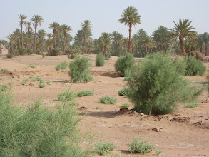 """Photo: The start of a """"Green Wall"""" close to the village Oulad Mhia, M'hamid"""