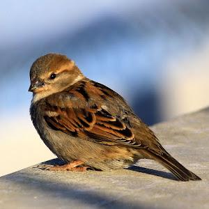 baby sparrow print ready no boarders.jpg