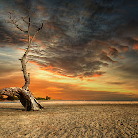 Lonely by Arief Wardhana - Landscapes Sunsets & Sunrises