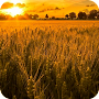 Farming Wallpaper APK icon