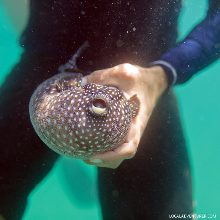 Snorkeling Cabo San Lucas with Cabo Expeditions.