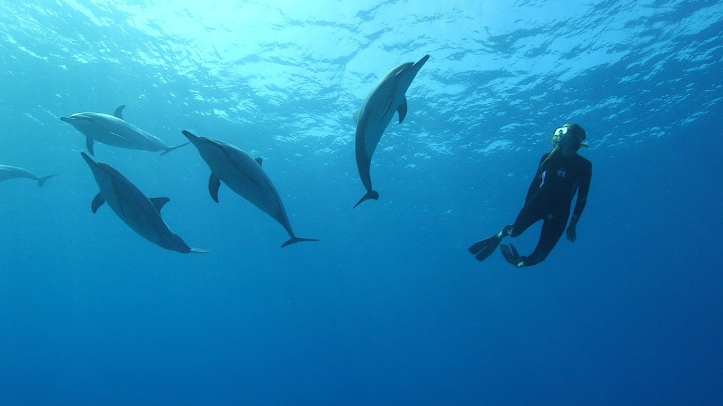 Watch Conversations with Dolphins live
