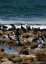 Photo: Waterbirds on Matanchen Bay