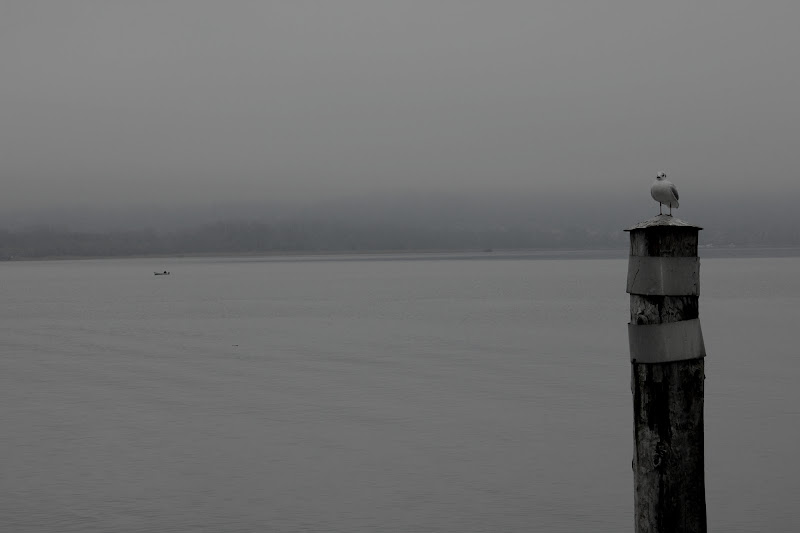 Seagull di marinelling