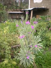 Photo: Weird flower in garden 2.
