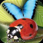 Popar Bugs icon