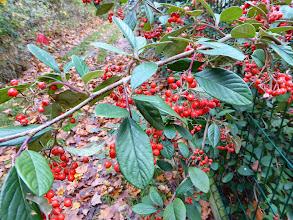 Photo: Fruits d'automne