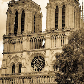 Notre Dame by George Nichols - Buildings & Architecture Public & Historical (  )