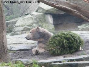 Photo: Hm, ist ganz gemuetlich neben dem Tannenbaum ;-)