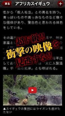 【衝撃】危険生物〜グロ!キモ!すべて本物!都市伝説なし!のおすすめ画像4