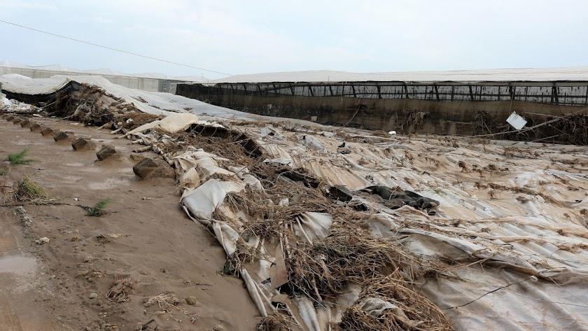 Explotación agrícola dañada en Almería.