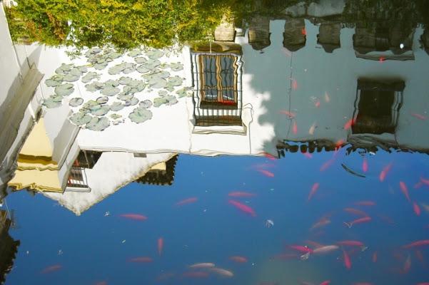 Pesci volanti di Selene*