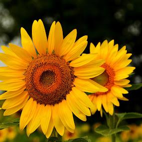 by John Berry - Flowers Flower Arangements