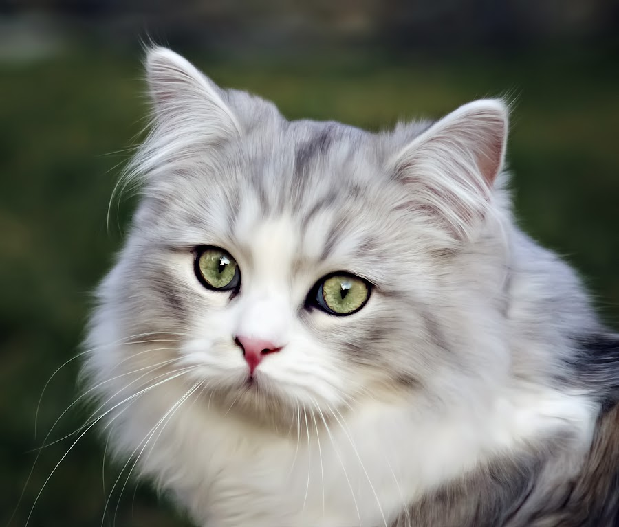 by Amy Gant - Animals - Cats Portraits ( cutest cats )