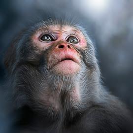 Faith by Sid Verma - Digital Art Animals ( feel, divine, belief, faith, wildlife, believe, divine monkey, macaques, emotion, artistic macaque, sidvermaphotography.com, sid verma photography, indian macaque, indian monkey, monkey )