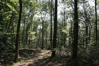 Photo: Forêt de l'aiguille (20|32)