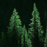 К чему снится елка?