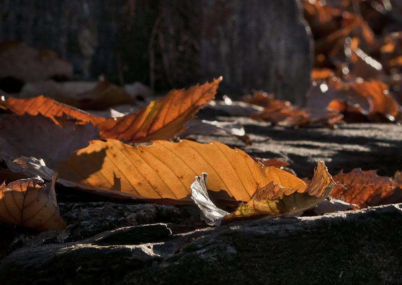 Fall(en) di jandmpianezzo@bluewin.ch