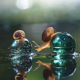 snails by Yulianto Pongge - Nature Up Close Water ( natural light, macro, nature, national geographic, macro photography, nature up close, snail )