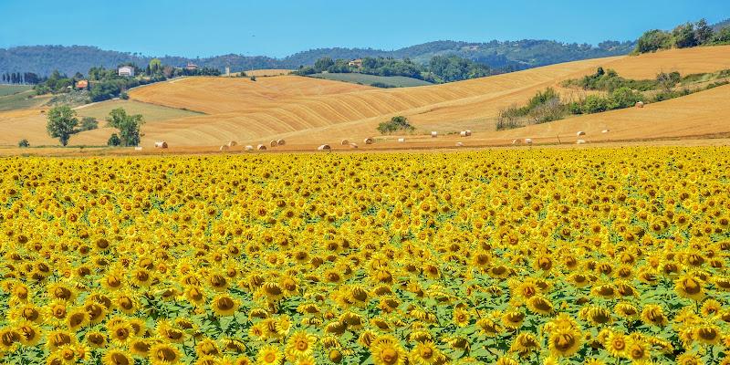 Un mondo giallo di marcopardiphoto