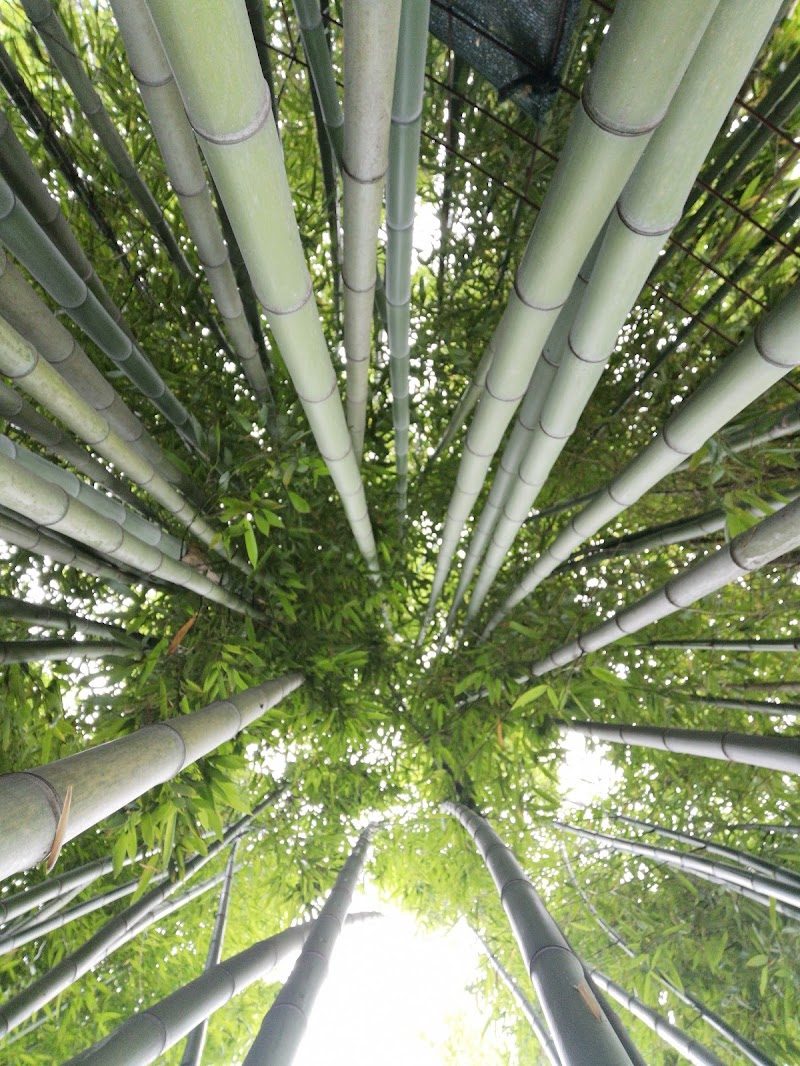 Bambù  di patsie_1506