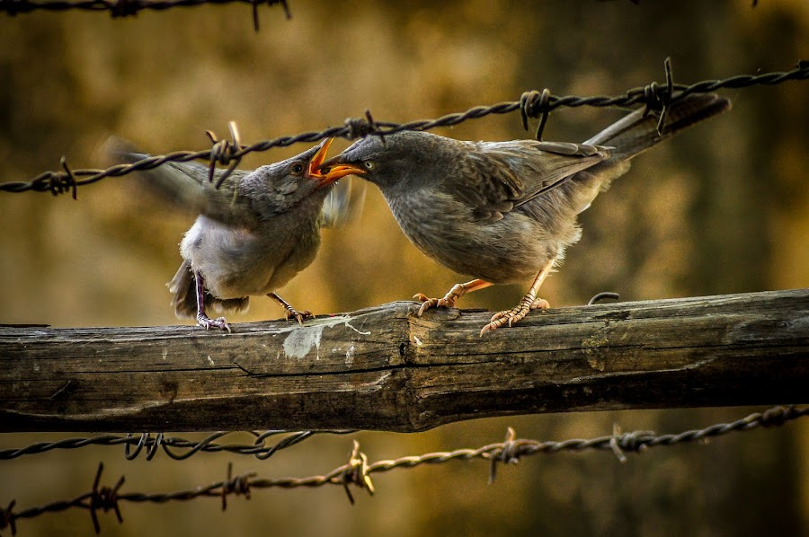 Mother's love by Incomplexity - Animals Birds ( #bird, #unconditional, #love, #motherslove, #infinity )