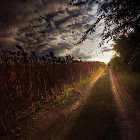 by Alexandru Popovski - Landscapes Travel