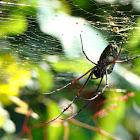 Batik Golden Web Spider