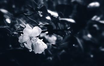 Photo: midnight bloom #monochromemonday #flowerphotography