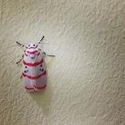 Bella moth