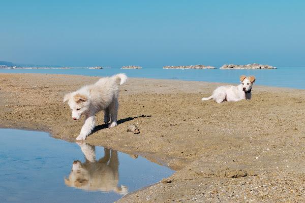 Mirror on the Beach di killerqueen
