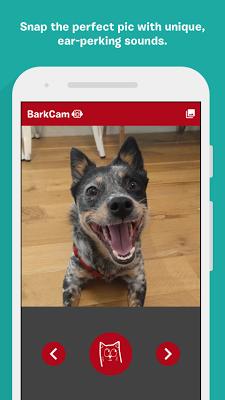 BarkCam - screenshot