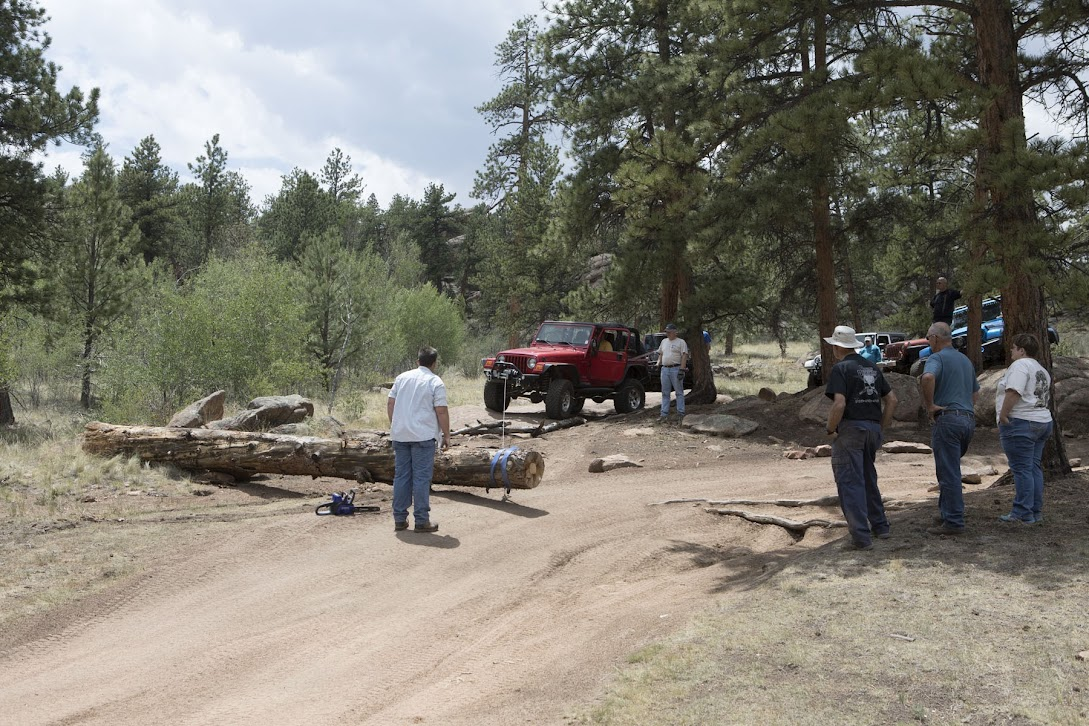moving a large fallen tree to block an illegal bypass