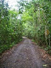 Photo: Following a jungle trail, Pipeline Road