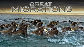 Great Migrations thumbnail