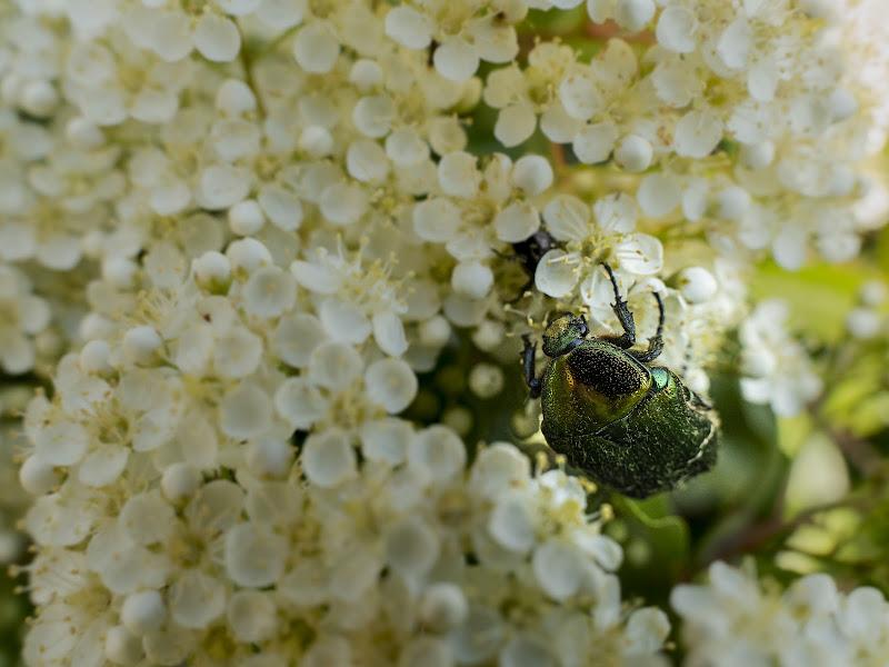 Polline di AnD