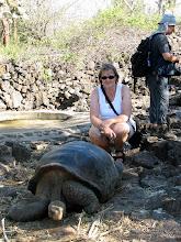 Photo: Charles Darwin -aseman kilpikonna (ja Pirkko)
