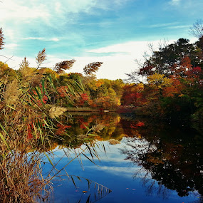 Weinberg Pond Scenery 2015 by Matthew Beziat - Landscapes Waterscapes ( pasadena, ponds, weinberg park, autumn, fall, anne arundel county, weinberg, maryland, pasadena maryland, waterscapes, pond,  )