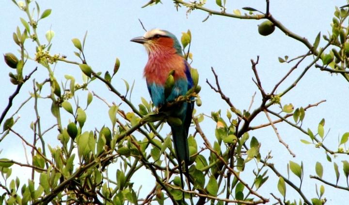 Rainbowbird di mosquita79