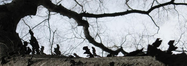 Photo: 樹皮(タイトル冬の対話 木上の垂訓)ICUの木