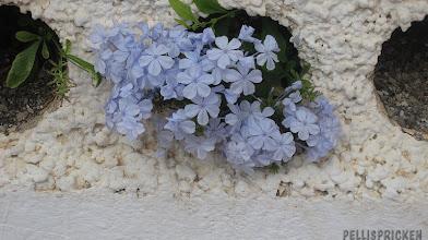 Photo: Titt-ut genom stakethål