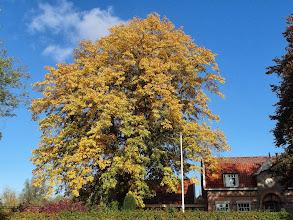 Photo: Grinkgo, Raadhuislaan, Mijnsheerenland