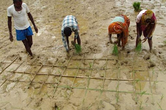 Photo: Farmers in Madhya Pradesh use a bamboo marker, an example of local innovation.