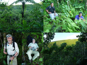 Photo: Ta'u, AS - June 22, 2013 - [tl] Judds Crater wasn't very impressive - perhaps because it is overgrown  [tr] Koli and Tom (the guides) resting  [bl] Roger is looking happy as he rests  [br] Looking up toward the summit from Judds Crater