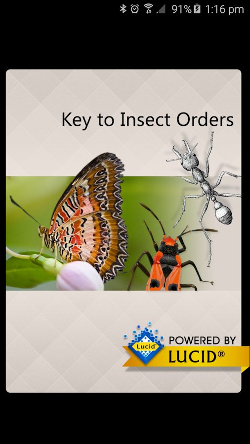Insect Orders- screenshot